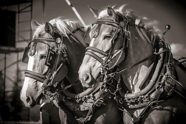 日本における競馬の歴史